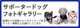 サッカー日本代表サポータードッグ
