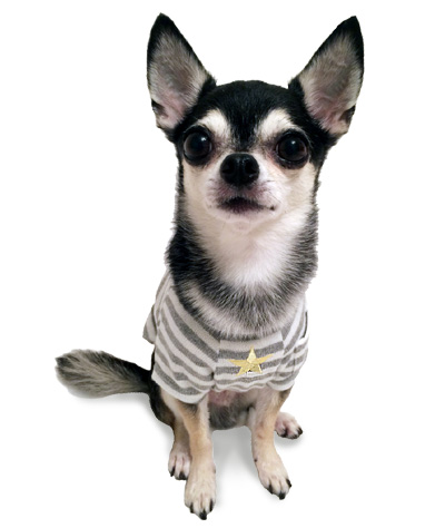 15aw-border-t-dog3.jpg