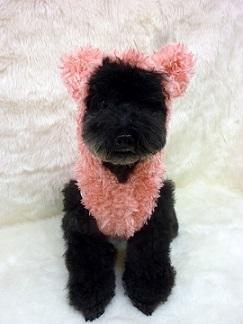 poodlefar-pop-pink-mae2.jpg